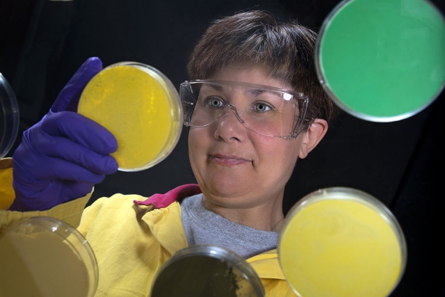 A Y‑12 lab technician examines some of the colorful aspects of uranium.