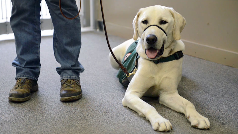Smoky Mountain Service Dogs: Service from the heart